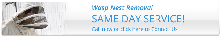 same day service Wasp Removal Bristol